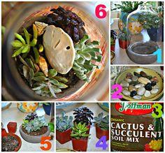 How-To Make a Succulent Terrarium
