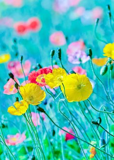 Spring Flowers in bloom. Natural Images of spring. Colorful Flowers, Spring Flowers, Wild Flowers, Beautiful Flowers, Meadow Flowers, Beautiful Gorgeous, Flower Colors, Poppy Flowers, Colours