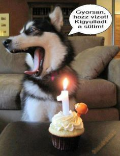 You Shouldn't Have - Funny Happy Birthday Meme Funny Dogs, Funny Animals, Cute Animals, Funny Memes, Dog Memes, Funny Comedy, I Love Dogs, Puppy Love, Cute Dogs