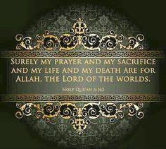 Live for Islam. Die for Islam. Live for Allah. Die for Allah.  #islam #deen #Muslim #prophetmuhamed #Allah #sunnah #quraan #hadith #quran #dua