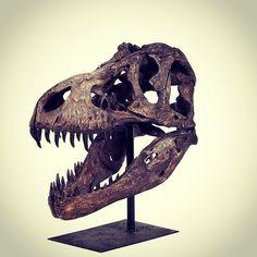 Tyrannosaurus head #unique #homedecor #2014NewFallArrivals Www.rattanplus.ca