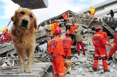 Search and Rescue Dogs – Canine Heroes! Search And Rescue Training, Search And Rescue Dogs, Dog Training, Survival Food List, Survival Tips, Homeless Dogs, Most Popular Dog Breeds, Yorkie Puppy, Dog Pin