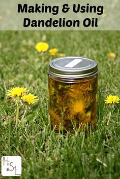 Infundir flores de diente de león en aceite para aliviar el dolor muscular y…