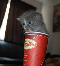 Madame Fluff in a cup
