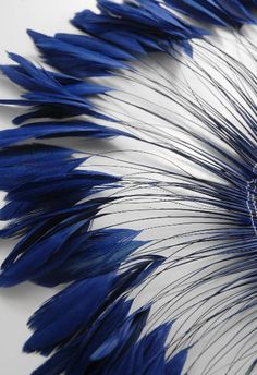 "Coque Feathers Blue Stripped 6-8"" tall 12"" Strung Length $28"