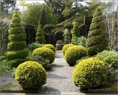 Yew, box and privet trimmed into topiary shapes in the herb garden at York Gate, Adel, Leeds.