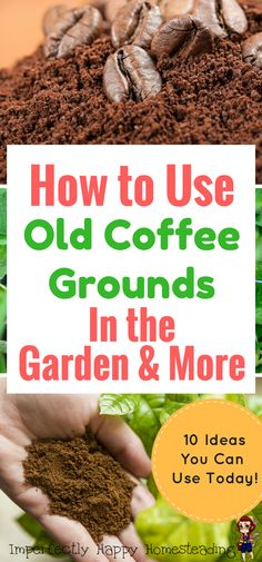 How to Use Old Coffee Grounds in the Garden & More. Great for gardeners, homesteaders and coffee lovers.: