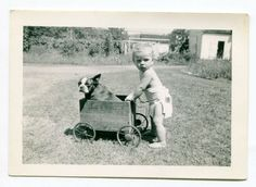 Baby pushing a very polite Boston Terrier in a cart