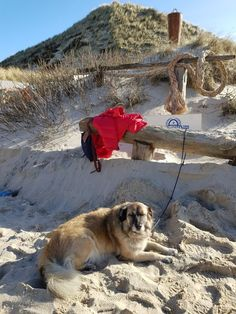 Wenn man als Bloggerhund so geparkt wird - schön ist das nicht … #bloggermithund #bloggerhund Dogs, Animals, Harbor Seal, Photoshoot, Nice Asses, Animales, Animaux, Doggies, Animal