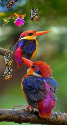 10 Beautiful and Colorful Birds - Animals Rare Birds, Exotic Birds, Colorful Birds, Exotic Animals, Colorful Animals, Tropical Birds, Nature Animals, Animals And Pets, Cute Animals