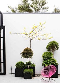 Black pots, white wall, pink chair. Pinned to Garden Design - Pots & Planters by Darin Bradbury.