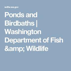 Ponds and Birdbaths    Washington Department of Fish & Wildlife