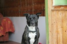 Dogs for Adoption (@UKRescueDogs) | Twitter