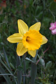 ¿Una flor? Narciso
