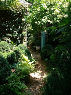 boxwood, autumn fern, oak leaf Atlanta garden - hydrangea, hosta,different types of English ivy, acorus, cast iron plant, Clematis armandii, Confederate jasmine