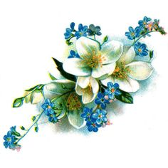 Blue and White Flowers ❤ liked on Polyvore