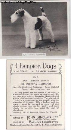 CHAMPION !!WFT the wonder dog.