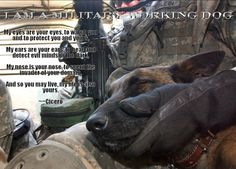 Such a great photo and passage about military working dogs. Such loyal companions and fellow veterans.