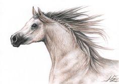 """Saatchi Online Artist Nicole Zeug; Drawing, """"Arabian Horse"""" #art"""