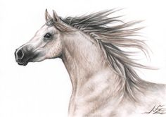 "Saatchi Art Artist Nicole Zeug; Drawing, ""Arabian Horse"" #art"