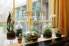 I love this!! Fabulous tips on how to make gorgeous terrariums at home!  This is my next project!  {Double click the picture to get to the tutorial}
