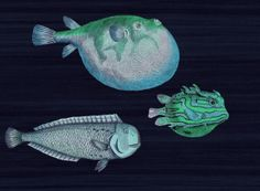 Project Nursery - Acquario Wallpaper Cole and Son Blue
