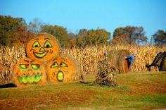 Hay bale pumpkins