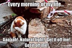 Night Shift Problems