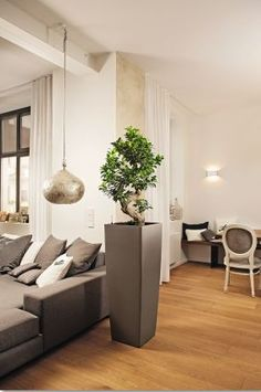 GORGEOUS stylish living OFFICE PLANTS – can be rented with full maintenance or purchased. Interior, Office Plants, Dinning, Home, Dinning Room, Live Plants, Interior Design, Indoor Plants, Ficus