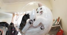 Transparent Bubble Chair That We Created For Cats | Bored Panda