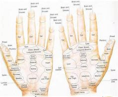 reflexology ears - - Yahoo Image Search Results