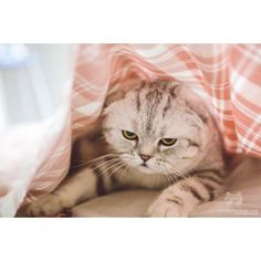 From @irisfold: Mondays.. #catsofinstagram [source: http://ift.tt/2nUp6QX ]