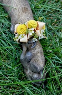 paw corsage! Too freaking cute! Ugly design but adorable concept. Dixie will def be a part of our wedding