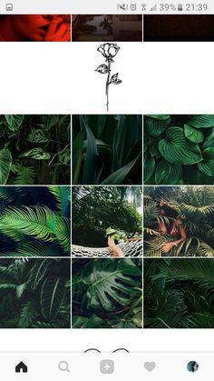 Зеленые аккаунты Instagram Feed Layout, Instagram Design, Instagram Tips, Pastel Roses, Blog Layout, Green Theme, Instagram Highlight Icons, Beauty Photos, Color Themes