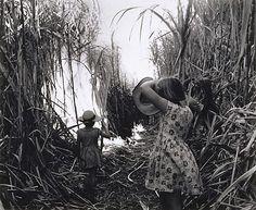 Max Dupain (Australia 22 Apr 1911–27 Jul 1992) Title Burning cane, Burdekin District, Queensland Other titles: Pam and Janet Pearce, Burdekin Year circa 1952