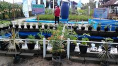 Tumbuhan dgn Yumina dan Bumina