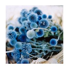 t a t i e l l e ❤ liked on Polyvore featuring backgrounds, flowers, blue, photos and pictures