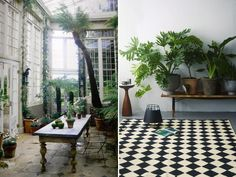 Indoor garden ↬ I like the idea of potted plants on a bench.