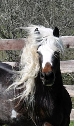 www.gypsyvannerforsale.com.  Please see our website for our horses for sale.  Thanks.