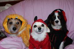 64 Best Dog Halloween Costumes images | Dog halloween, Dog