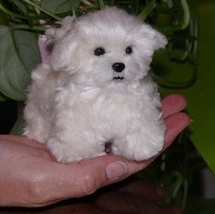 Custom Handmade Pet Portrait Sculpture / Needle Felted Dog by Artist GERRY / Maltese Puppy Molly / Lifelike Poseable - I want one of Kenzie!!