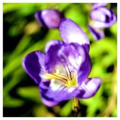 Gioco di sca...tti Garden, Plants, Garten, Gardens, Planters, Tuin, Plant, Planting, Yard