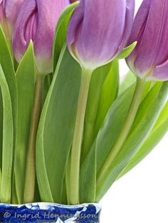 Spring Tulips by Ingrid Henningsson/Of Spring and Summer