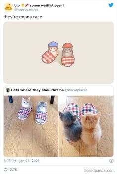 Animal Jokes, Funny Animal Memes, Funny Animal Pictures, Cat Memes, Cute Little Animals, Cute Funny Animals, Funny Cute, Cute Animal Drawings, Cute Drawings