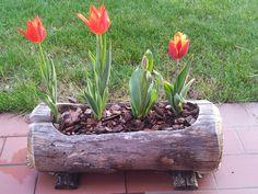 Risultati immagini per tulipani in vaso