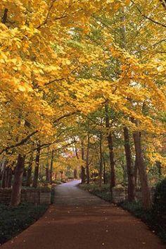 Driveways and entrances - www.myLusciousLife.com - English woodlands2.jpg