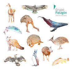 Calendario Fauna Patagónica on Behance