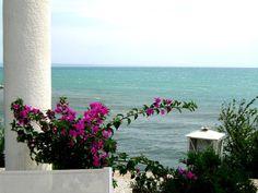 Bougainvillea the sea - St. Helena and Constantine resort, Black sea, Bulgaria