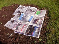 Newspaper weeds away: Plant your plants in the ground, work the nutrients in your soil. Then wet newspapers, put layers around the plants overlapping as you go, cover with mulch, and forget about weeds. Weeds will get through some gardening plastic they will not get through wet newspapers.