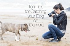 Ten Tips for Catching Your Dog on Camera | WOOFipedia by The American Kennel Club
